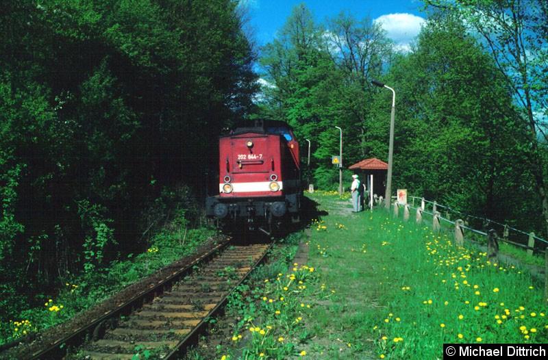 Bild: In Amtshainersdorf kam die 202 844 auf dem Weg nach Bad Schandau vorbei.